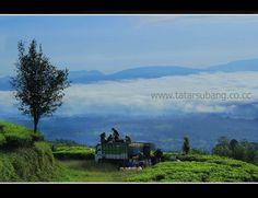 Tea Farmers in Ciater, Subang, West Java