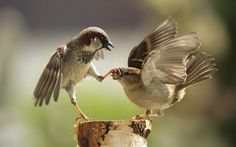 15absolutely unbeatable photographs taken just atthe right moment