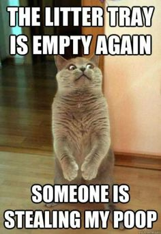 Image of: Hilarious Funny Quotes Cartoons Memes Funny Cat Quotes Funny Cat Pinterest 97 Best Random Silly Stuffamickbutt Images Hilarious Funny