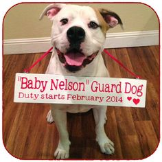 Super cute for dogs of adoptive families