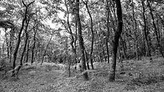 Bosque / Forest