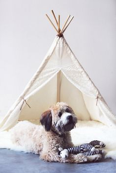 OMG pets need teepees so they can cozy away and read a good book and chew on your favorite shoes!