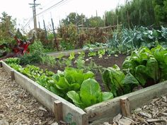 Organic gardening demands work, energy and research. Organic vegetable gardening usually means that the procedure for food production has little if an...