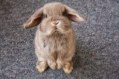 "vogue-coast: "" made-for-milan: "" A BUNNY OMG ITS SO CUTE:) """