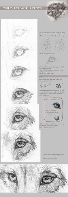 Tutorial: Wolf's eye with a pencil by Furrirama.deviant… on Tutorial: Wolf's eye with a pencil by Furrirama. Pencil Drawing Tutorials, Sketches Tutorial, Drawing Tips, Drawing Sketches, Eye Tutorial, Animal Sketches, Animal Drawings, Pencil Drawings, Drawing Animals
