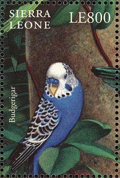 Sierra Leona 2000 - El Periquito Común, Periquito Australiano, Cotorra Australiana o Cata Australiana