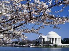 Washington DC... I would love to go back. It was a beautiful city... made me proud to call it our nation's capital.