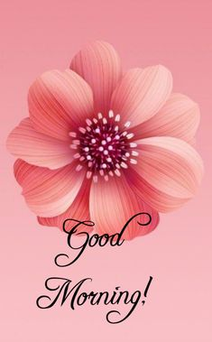 Good Morning Flowers Pictures, Good Morning Beautiful Pictures, Good Morning Roses, Morning Pictures, Good Morning Images, Good Morning Wishes Quotes, Good Morning Cards, Good Morning Greetings, Love Morning Image