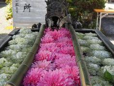 京都で大人気の花手水が見たいおすすめスポット選京都府LINEトラベルjp 旅行ガイド Shag Rug, Travel Guide, Decor, Shaggy Rug, Decoration, Dekoration, Rug, Inredning, Tour Guide