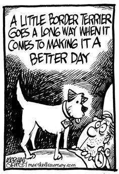 A little Border Terrier