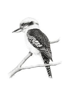 Artwork Kookaburra Limited Edition 25 fine art by DaisyClaridge Native Drawings, Bird Drawings, Pencil Art Drawings, Animal Drawings, Australia Tattoo, Ink Pen Art, Beads Pictures, Australian Birds, Color Pencil Art
