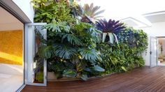 Green wall how to successfully install and take care of a living plant wall - Vogue Australia Small Gardens, Outdoor Gardens, Vertical Garden Wall, Vertical Gardens, Spot Design, Artificial Green Wall, Outdoor Retreat, Plant Species, Plant Wall