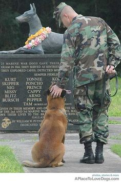 Service Dogs are Honored too!