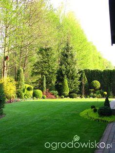 Borówcowy - Forum ogrodnicze - Ogrodowisko
