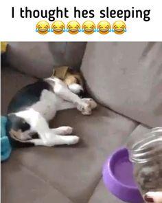 puppies sleeping & puppies sleeping , puppies sleeping through the night , puppies sleeping in bed , puppies sleeping together , puppies sleeping funny Cute Animal Memes, Cute Animal Videos, Animal Jokes, Cute Funny Animals, Funny Cute, Funny Dog Memes, Funny Dog Videos, Cute Animal Pictures, Funny Animal Pictures
