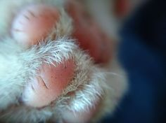 The Paw Photo by Ismayanti - -- National Geographic Your Shot