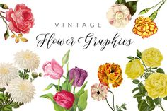 Vintage Flower Illustrations by Charming Ink on @creativemarket