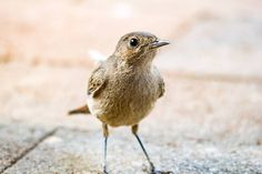 The perks of small town life #birds #birdsofinstagram #birding #birdingphotography #photography #photographer #pixel_panda #photobug #photoshare #naturephotography #naturelovers #canon #canonphotography #sigma #natgeo #naturaleza #instagramza #instagramsa #southafrica #southafricaza #wowsouthafrica #foreversouthafrica #fortheloveofphotography #loves_southafrica #sarahvdb #southafrica #kznmidlands #igshotz #igers_southafrica #igers #myshotza