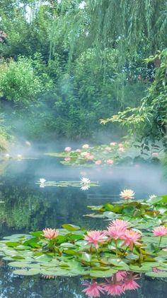 Water Lily Pond Of Ikebukuro Seibu Rooftop Garden Japan ? Beautiful World, Beautiful Places, Beautiful Scenery, Nature Aesthetic, Aesthetic Plants, Lily Pond, Aesthetic Pictures, Pretty Pictures, Aesthetic Wallpapers