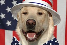 Pet safety tips for the Fourth of July Baby Puppies, Cute Puppies, Dogs And Puppies, Doggies, Big Dogs, Dancing Day, Letting Go Of Him, Pet Safe, Dog Chews