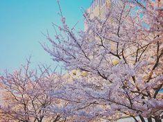 TOKYO MIDTOWN - Roppongi Tokyo JAPAN iPhone8/iPhonenativecamera/VSCO  #TOKYOMIDTOWN #cherryblossom #sakura2018 #japan #iPhonenativecamera #youmobile #shotoniPhone #instadiary #shotoniPhone8 #instagramjapan #ig_japan #instadiary #iphonephotography #ink361_mobile #ink361_asia #reco_ig #igersjp #mwjp #team_jp_flower #indies_gram #hueart_life #ig_street #streetphotography #スマホ写真部 #写真好きな人と繋がりたい #写真撮ってる人と繋がりたい #東京カメラ部 #tokyocameraclub  #iPhone越しの私の世界