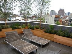 SoHo Roof Garden with birches
