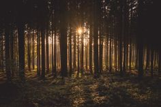 Cool Pictures Of Nature, Pictures Images, Hd Photos, Free Pictures, Free Images, Dusk, Outdoor Gear, Mists, Woodland