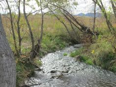 """Along the creek, hiking in Lafayette, just outside of #BoulderColorado where you get a lot more """"bang for your buck"""" when it comes to #BoulderRealEstate"""