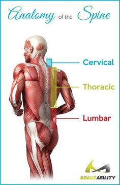 The most common symptom of lumbar spinal stenosis is leg pain. Learn the different symptoms of cervical & lumbar spinal stenosis & the treatment options. Leg Pain, Back Pain, Epidermoid Cyst, Lump Behind Ear, Swollen Lymph Nodes, Skin Bumps, Degenerative Disc Disease, Spinal Stenosis, Cleveland Clinic