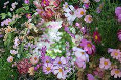 シェ松尾松濤レストラン様の装花 コスモス : 一会 ウエディングの花