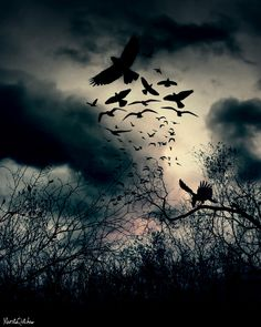 As he made his next step a twig snapped. A cascade of birds rose from their nesting place into the darkening sky. He knew he didn't have much time left.