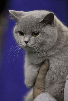 ¡Qué lindo gato! Su pelaje está precioso ⚜️