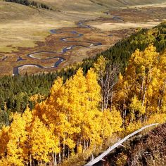 Aspens seem close to peak in a few places. #nofilter #crestedbutte #colorado #cbcolors #fallcolors #fall #eastriver #mtbhome #mtb #mountainbiking #14erskiers