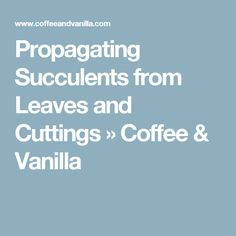 Propagating Succulents from Leaves and Cuttings » Coffee & Vanilla