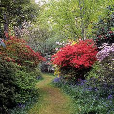Leonardslee Gardens, West Sussex, England   Colorful path through woodlands filled with flowering azaleas and rhododendrons in May (22 of 23)