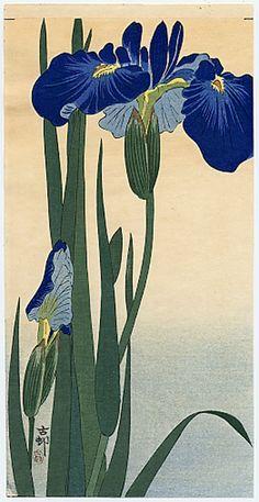 Blue iris - by Koson (japanese, 1877-1945)