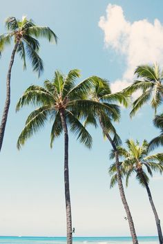 62 new Ideas photography summer nature palm trees Tropical Vibes, Tropical Paradise, Tropical Beaches, Tropical Style, Coastal Style, Summer Vibes, Foto Transfer, The Beach, Summer Beach