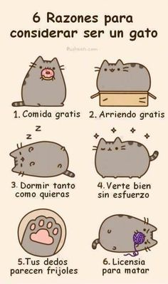 Six reasons to be a cat (Spanish)