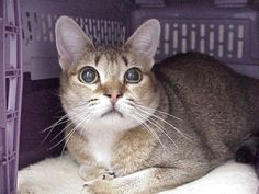 Exclusively Cats Veterinary Hospital Blog: Case study: Sally - Progressive Retinal Atrophy (PRA) in cats