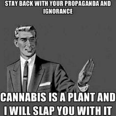 I am pro-choice on this topic.. Marijuana does help some people that have PTSD..... not all the time, but even a break from the anxiety is fine with me..... I love a good cup of warm tea......  :)