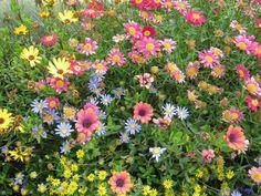 Wild flowers in Seaside Oregon Seaside Oregon, Champs, Wild Flowers, Beautiful Flowers, Scenery, Bloom, Dreams, World, Spring