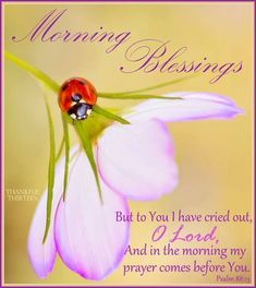 Good morning sweet lady! God bless you M. Ly