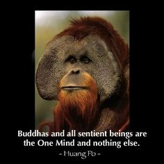 """""""Buddhas and all sentient beings are the One Mind and nothing else. This Mind is no mind of conceptual thought and it is completely detached from form. So buddhas and sentient beings do not differ at all."""" ~ Huang Po ~"""