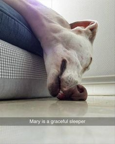 Funny Animal Pictures Of The Day - 19 Pics Source by dog dog memes dog videos videos wallpaper dog memes dog quotes dogs dogs pictures dogs videos puppies puppy video Funny Animal Memes, Dog Memes, Cute Funny Animals, Funny Cute, Funny Dogs, Funny Dog Fails, Animal Memes Clean, Dog Funnies, Crazy Funny