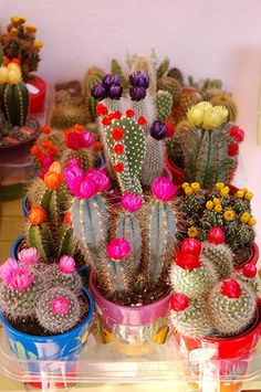 flowering cacti via confettigarden
