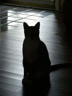The Shadow Cat