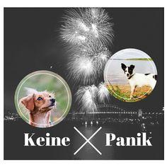 Fireworks Dog don't panic