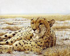 Robert Bateman - Quite a Beautiful Cheetah. Wildlife Paintings, Wildlife Art, Animal Paintings, African Paintings, Wild Animal Wallpaper, Tier Wallpaper, Africa Art, Cheetahs, Animal Sketches