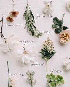 Flower Farm, My Flower, Flower Power, Magnolia Leaves, Flower Aesthetic, Dried Flowers, Pink Roses, Floral Arrangements, Peony