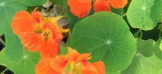 Balkonada blog - növénygondozás, csere-bere, növényápolási fórum